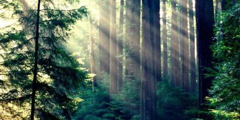Karura_forest_indegenious_forest