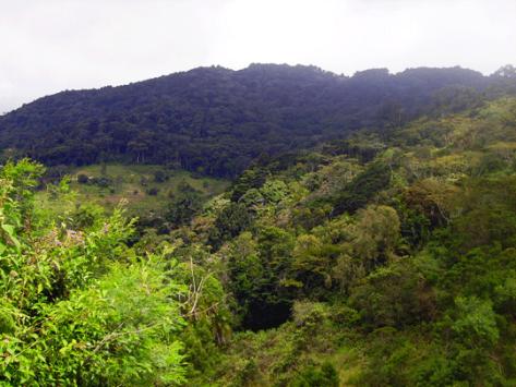 Ngangao-forest