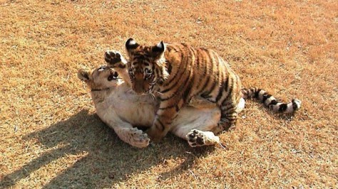 66771_unlikely-animal-friends-marquee-photo_uvhdsogk4caf4elzjl6uxwu4z3ncurxrbvj6lwuht2ya6mzmafma_610x343