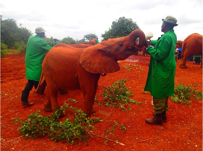 6700113-Watch_elephants_Nairobi