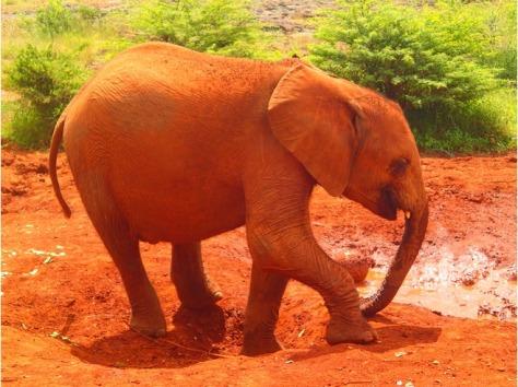 6700115-Watch_elephants_Nairobi