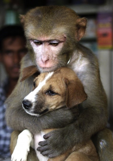 a-monkey-bought-from-an-animal-trader-in-bangladesh-spends-hours-hugging-and-cuddling-this-puppy