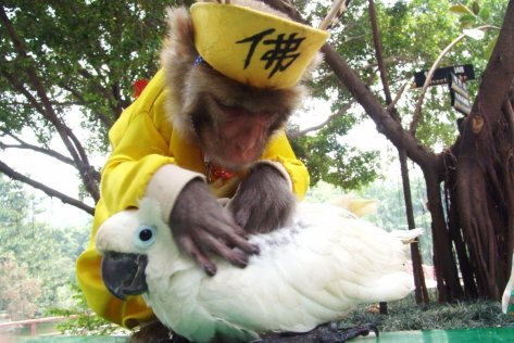 a-monkey-helps-a-parrot-get-rid-of-lice-at-a-wild-animal-park-in-china