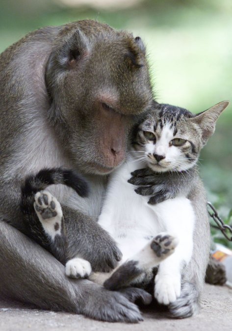 both-abandoned-by-their-owners-a-year-ago-this-monkey-and-cat-have-become-playmates-at-a-temple-in-thailand-the-monkey-even-checks-the-cat-for-lice