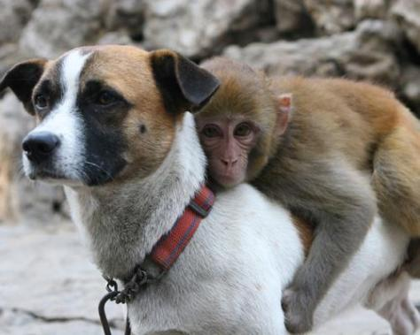 dogmonkey