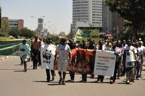 elephant_campaign_nairobi_ke