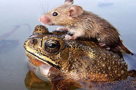 image-4-for-unlikely-animal-friends-gallery-359755382