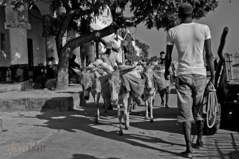 Lamu_Pictorial-8519