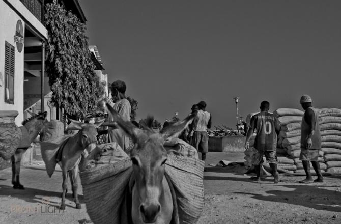 Lamu_Pictorial-8524
