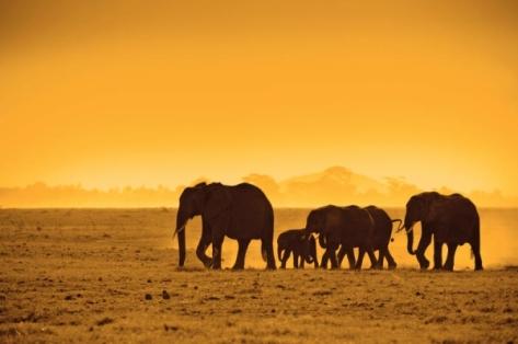 'The_Very_Best_of_Kenya'_Rondreis6809-17076
