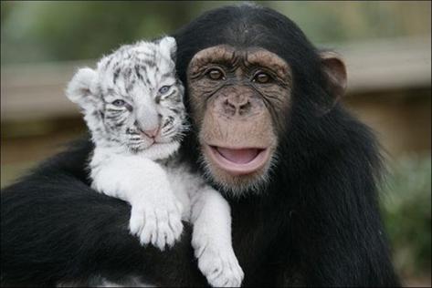 unlikely-animal-friends2