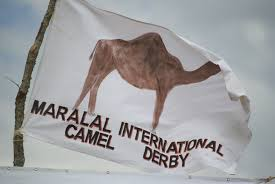 Off to the races; Maralal Camel Derby