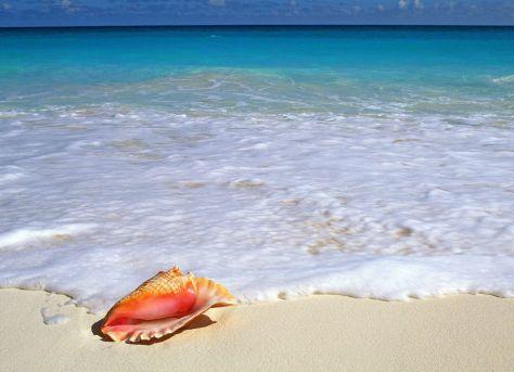 Beachside Treasure, Yucatan Peninsula, Mexico