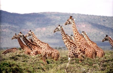 zuru kenya photography tips