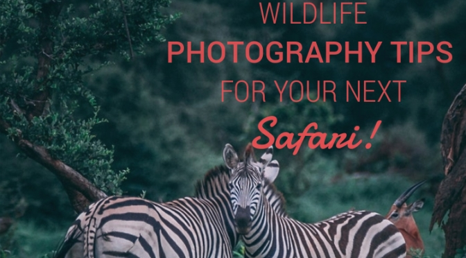 7 Wildlife Photography Tips to know for Your Next Safari