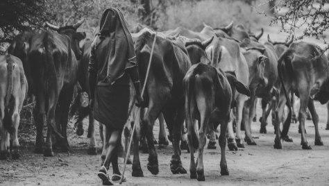 ZuruKenya #OnFocus
